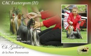 CAC-Esztergom-H-300x186 Exposiciones