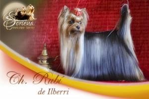 Ch-Rubi-de-Ilberri1-300x200 Hembras