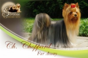 Ch.-Choppard-Far-Away-300x200 Ch. Choppard Far Away