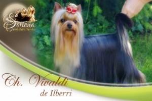 Ch.-Vivaldi-de-Ilberri-300x200 Ch.Vivaldi de Ilberri