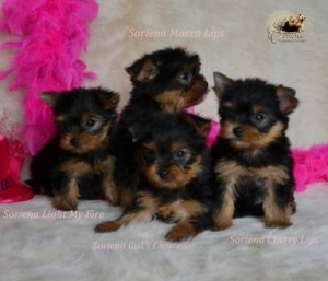 DSC_13150-300x257 Nombres de perros