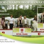 Galicien-GRANDCHAMPION-OF-SLOVAKIA-150x150 Exposiciones
