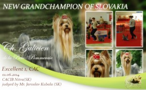 Galicien-NEW-GRANDCHAMPION-OF-SLOVAKIA-300x186 Exposiciones