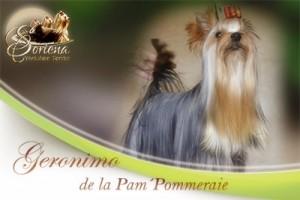 Gerónimo-de-la-Pam-Pommeraie-300x200 Gerónimo de la Pam´Pommeraie