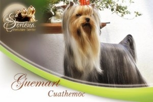 Guemart-Cuauthemoc-300x200 Machos