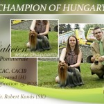 NEW-CHAMPION-OF-HUNGARY-150x150 Exposiciones