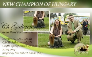NEW-CHAMPION-OF-HUNGARY-300x186 Exposiciones