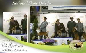 National-Show-Oviedo-300x186 Exposiciones