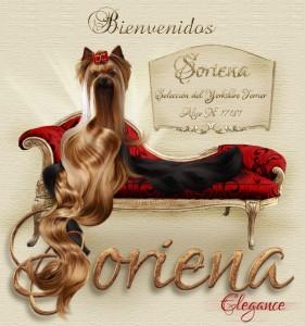 Soriena-Yorkshire-Terrier-Bienvenidos-281x300 Machos