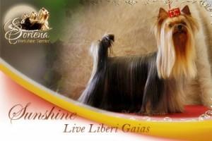 Sunshine-Live-Liberi-Gaias-300x200 Sunshine Live Liberi Gaias