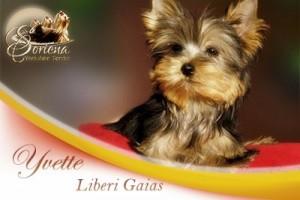 Yvette-Liberi-Gaias-300x200 Hembras