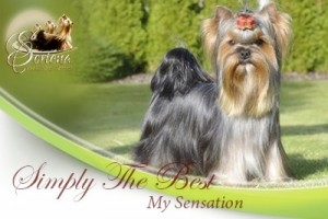 Simply-the-Best-My-Sensation-300x200 Machos