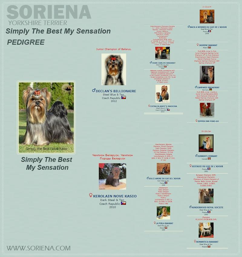 Simply-the-Best-Novè-Kasio-PEDIDREE Simply The Best My Sensation