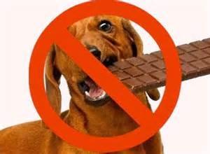 alimentos-prohibidos-300x220 Alimentos a evitar en perros