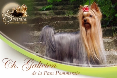 CH Galicien de la Pam pommeraie